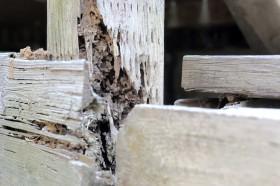 シロアリや害虫の被害